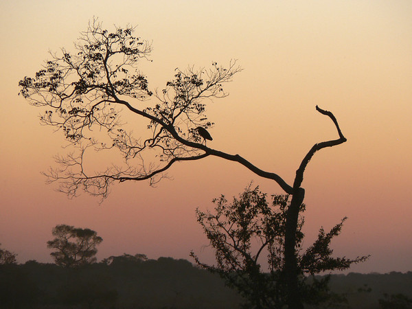 The Pantanal_Brazil_July-08